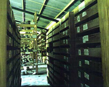 Figure 1. Pennsylvania Tikal Project shelving with skeletal remains in the new bodega at the Tikal Park.